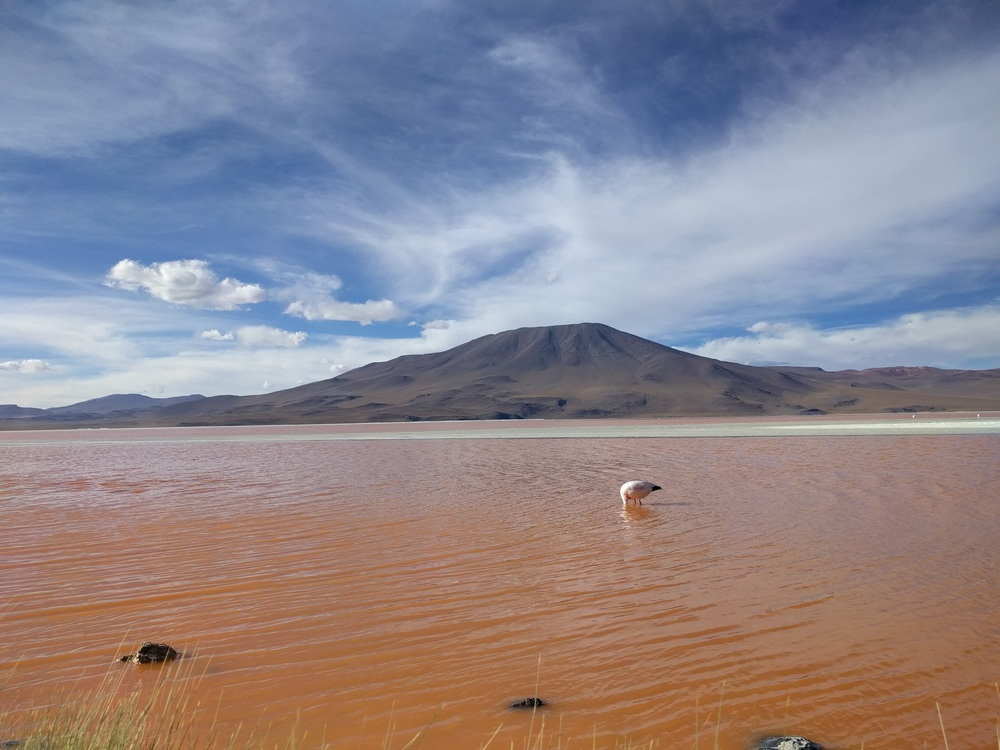 Flamingo in a red lagoon with a semi active volcano behind.
