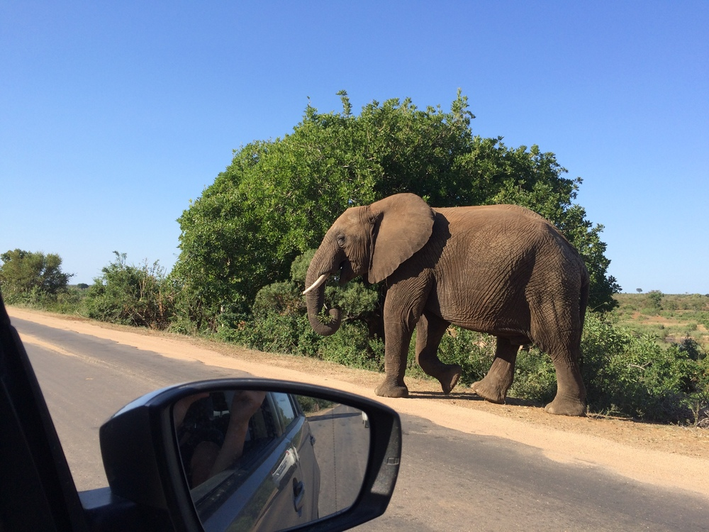 Elephants crossing at Addo Elephant Park