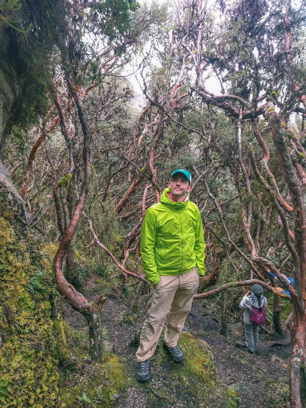 Fairy Forest in Parque Cajas, Ecuador