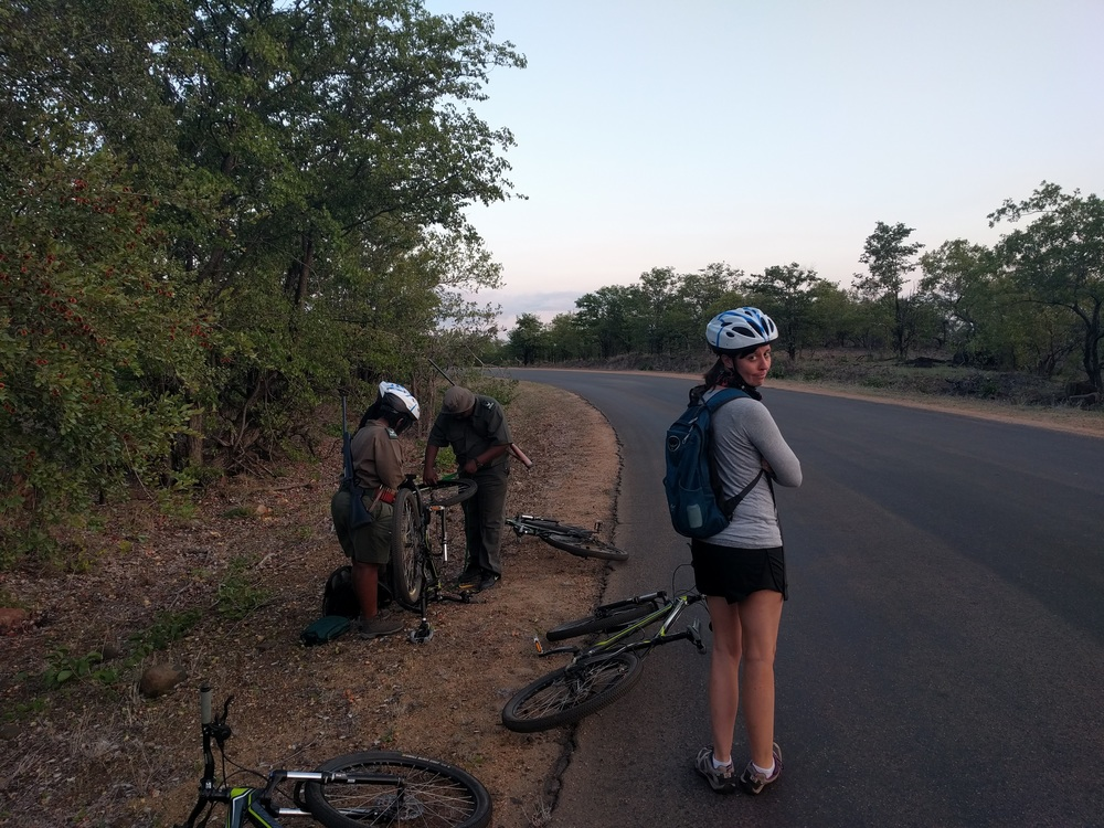 We were supposed to go on a fantastic bike ride through Kruger National Park.  Our bikes broke 5 minutes in, and we waited by the road for 45 minutes while the guides attempted to fix them.  They were not successful.