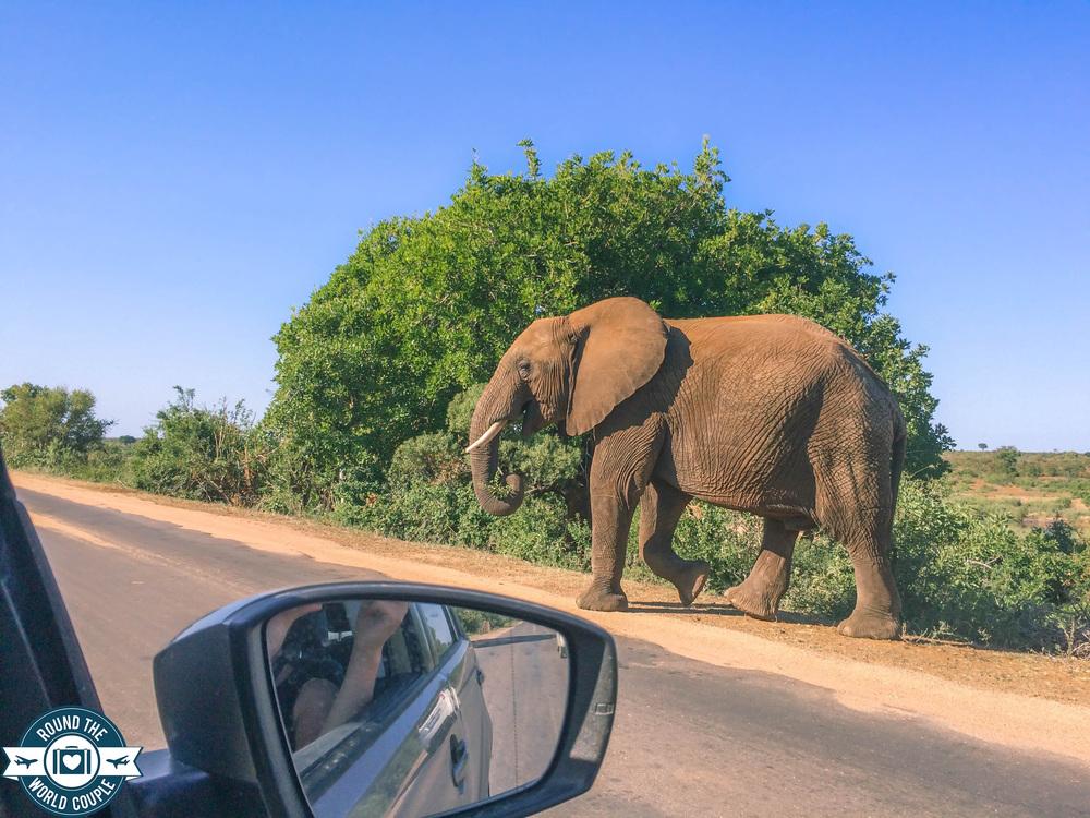 Kruger elephant 3 (1 of 1).jpg