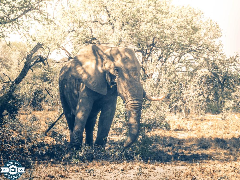 Kruger elephant 4 (1 of 1).jpg