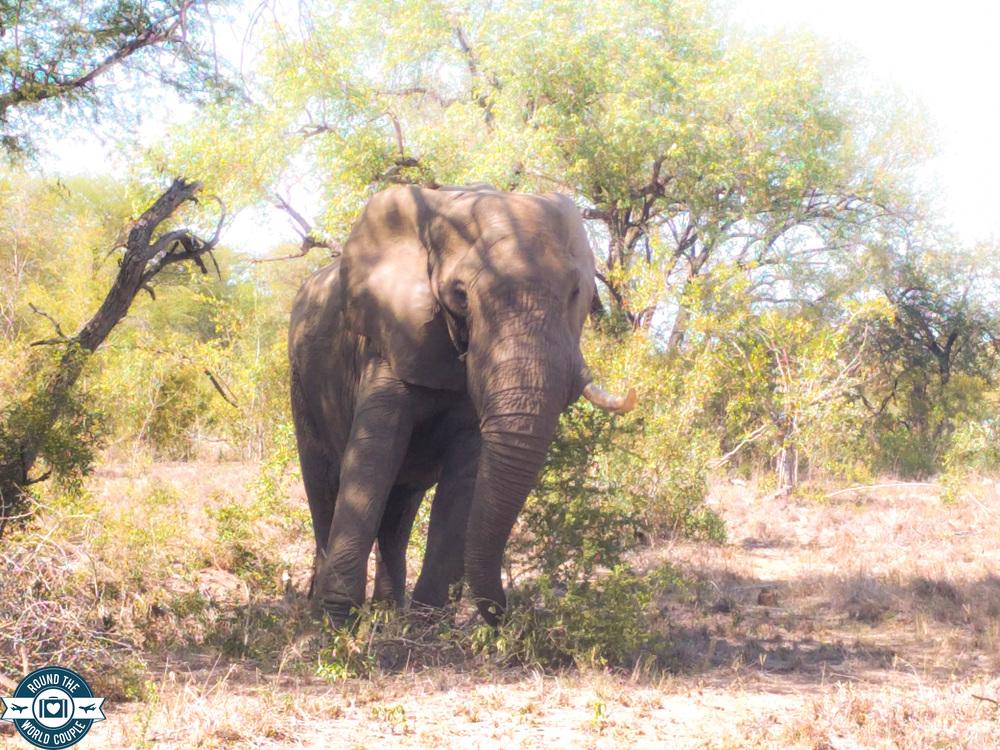 Kruger elephant 5 (1 of 1).jpg