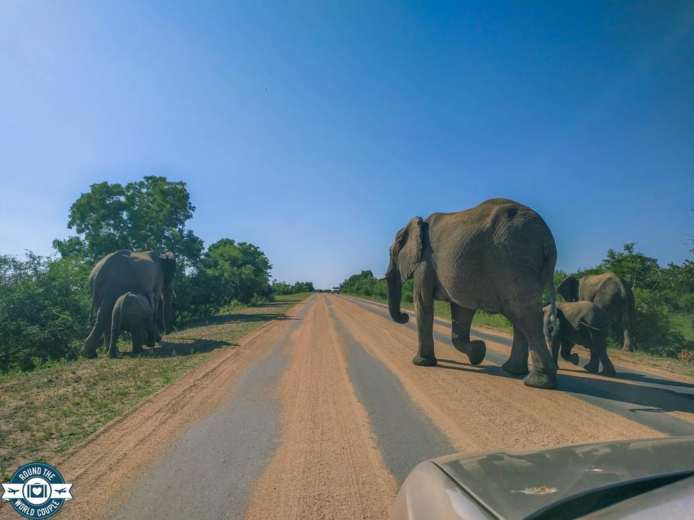 Kruger Elephant Road (1 of 1).jpg