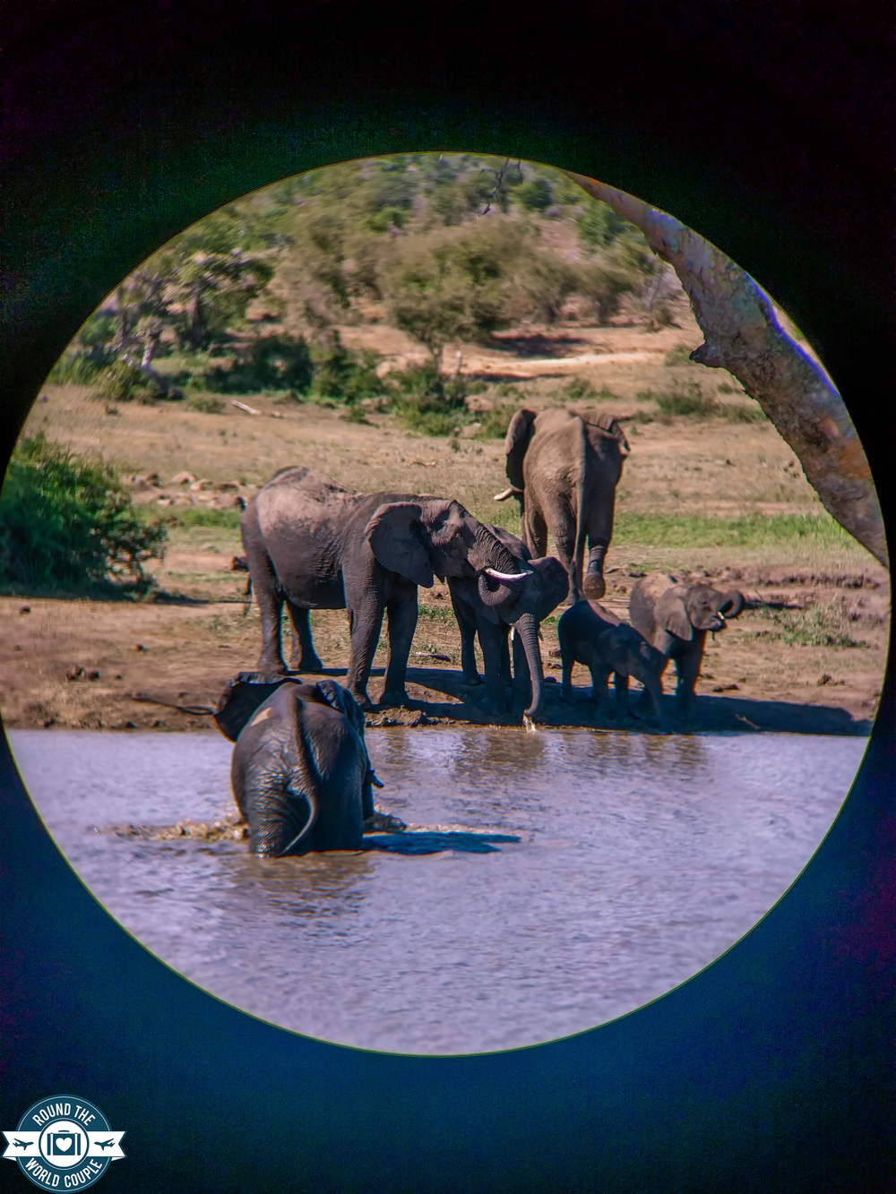 Kruger elephant watering hole (1 of 1).jpg
