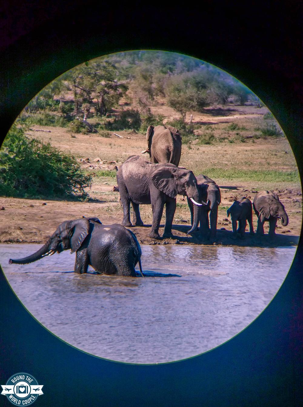 Kruger elephant watering hole 1 (1 of 1).jpg