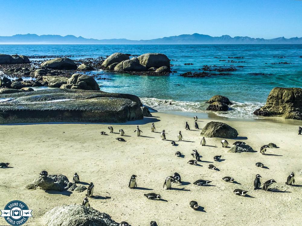 Cape point penguins (1 of 1).jpg