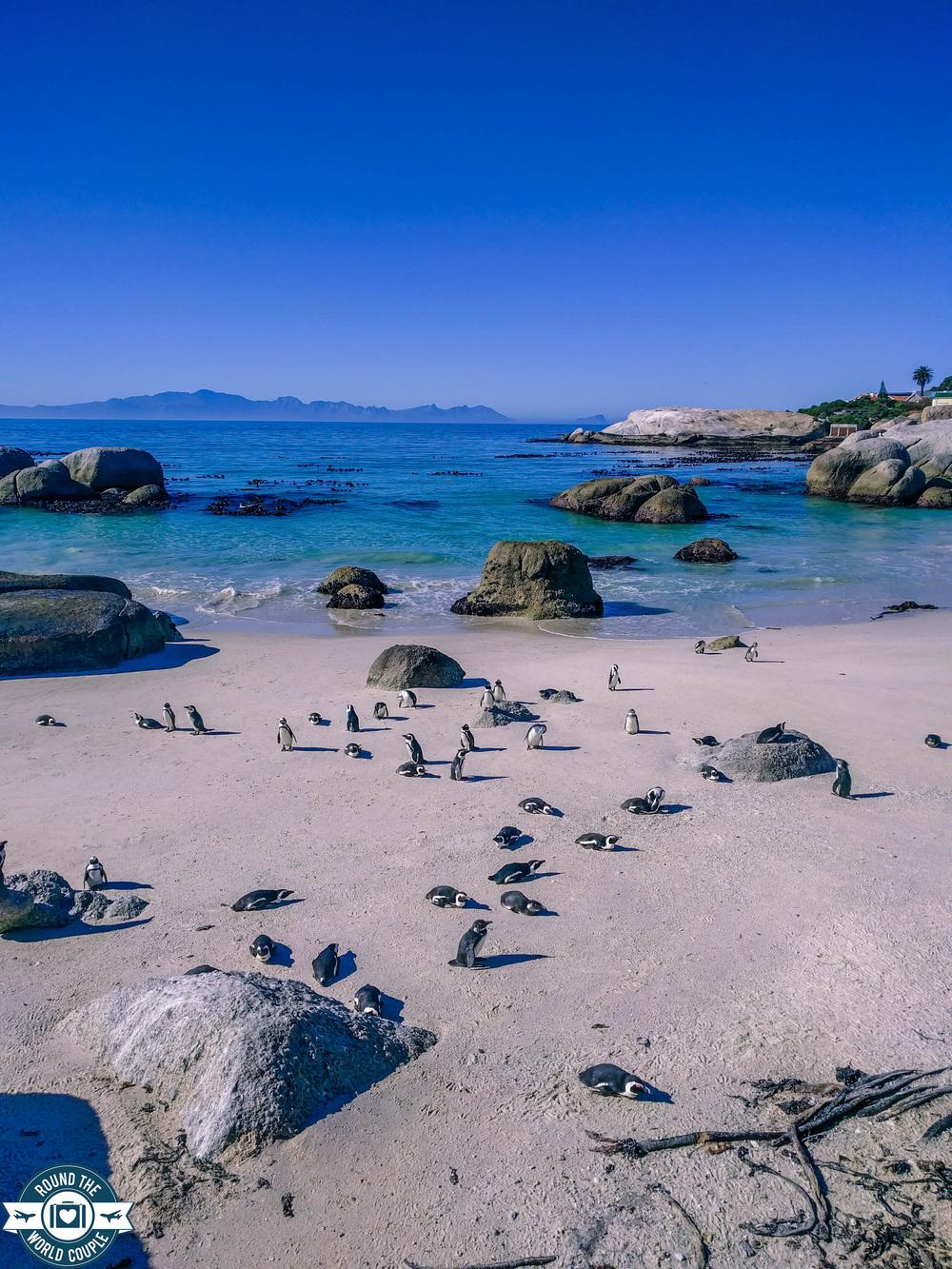 Cape point penguins 2 (1 of 1).jpg