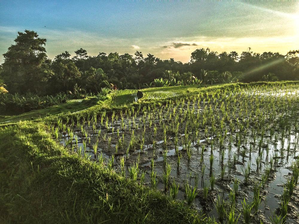 Bali- 13 (1 of 1).jpg