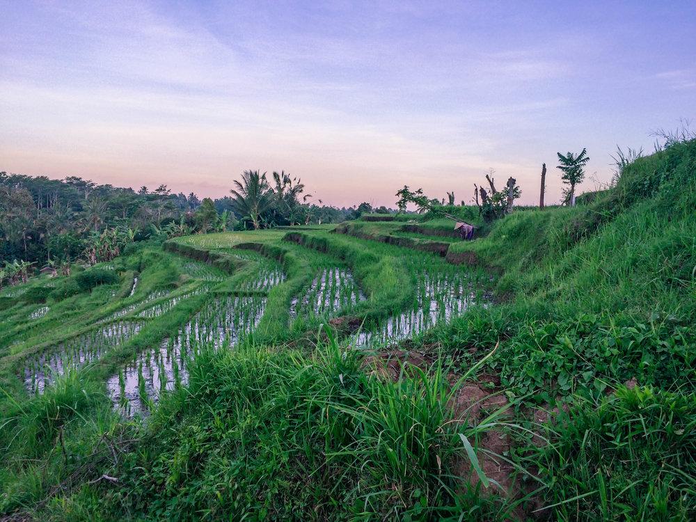 Bali- 15 (1 of 1).jpg