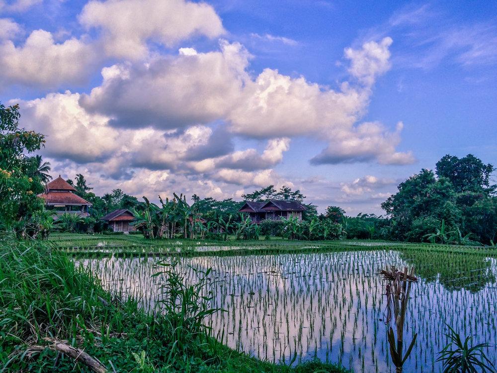Bali- 20 (1 of 1).jpg