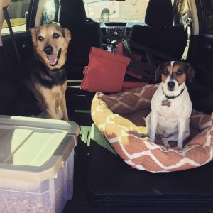 Mojito and Lucy, the pups they cared for at their Phoenix housesit