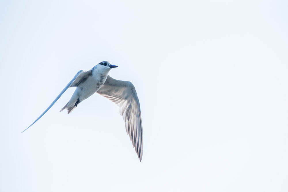 Pulicat_Birds15.jpg