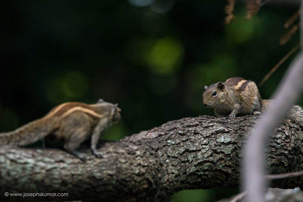 A confrontation.
