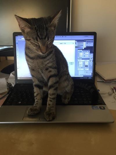 my-kitten-helping-me-work