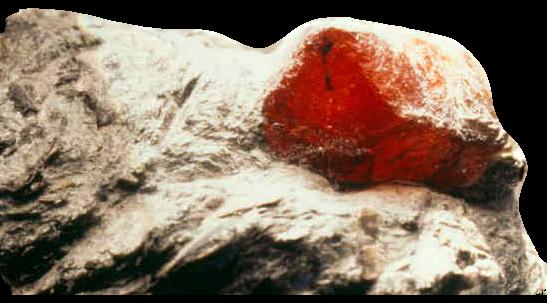 Carbunculus