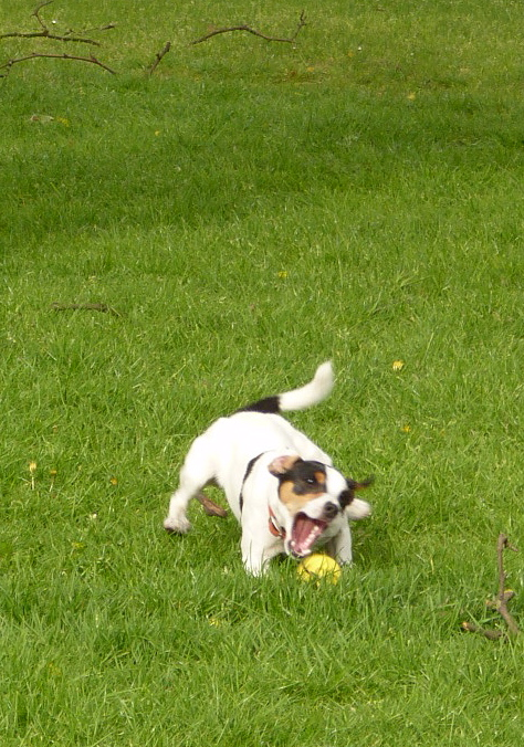 I don't like to brag but... I am  very  good at catching and catching balls.