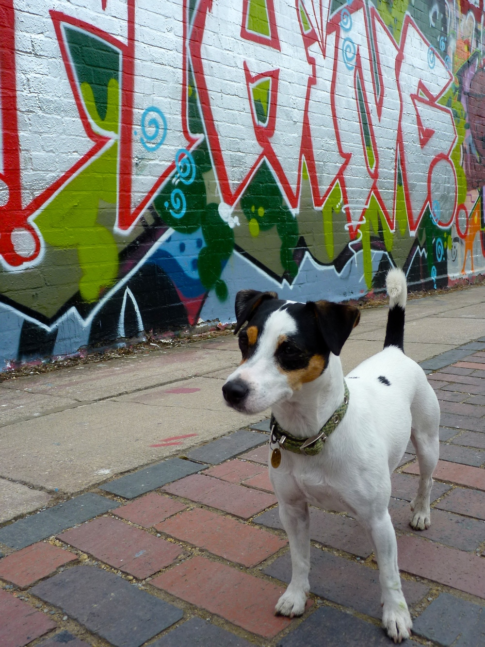 Olive Daddy likes to take pictures of graffiti art. While he takes pictures I like to smell things. My sense of smell is much better than humans. When I walk down the street and sniff, I can tell which other dogs have been there-- and what they've been eating. Isn't that cool? It's like reading a newspaper with my nose! What do you think I'm smelling now? What can you smell right now?