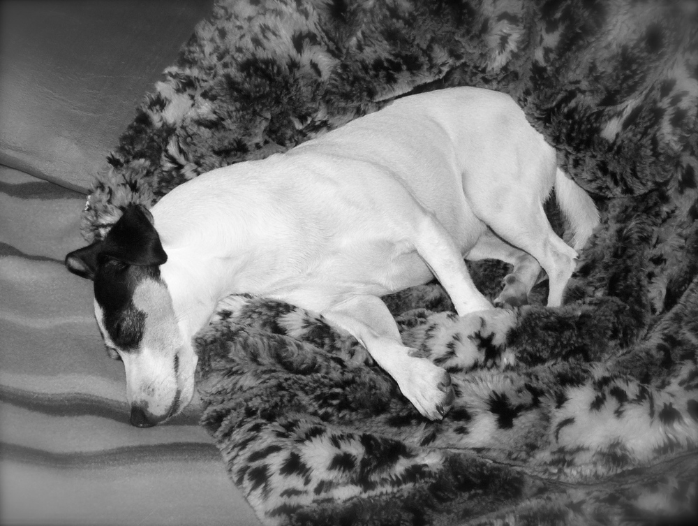 Nap time! Some people say they dream in black and white, others say in color. Do you think I dream in black and white? Or blue and yellow? How do you two dream?