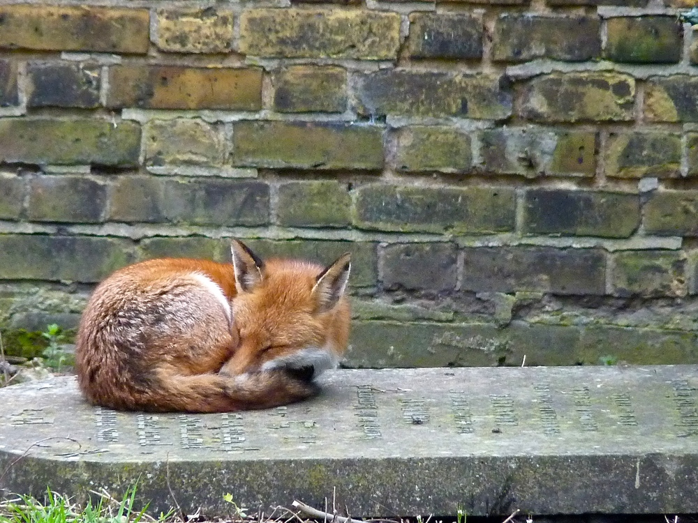 That's right, Foxykins, you go back to sleep. I'm watching you!