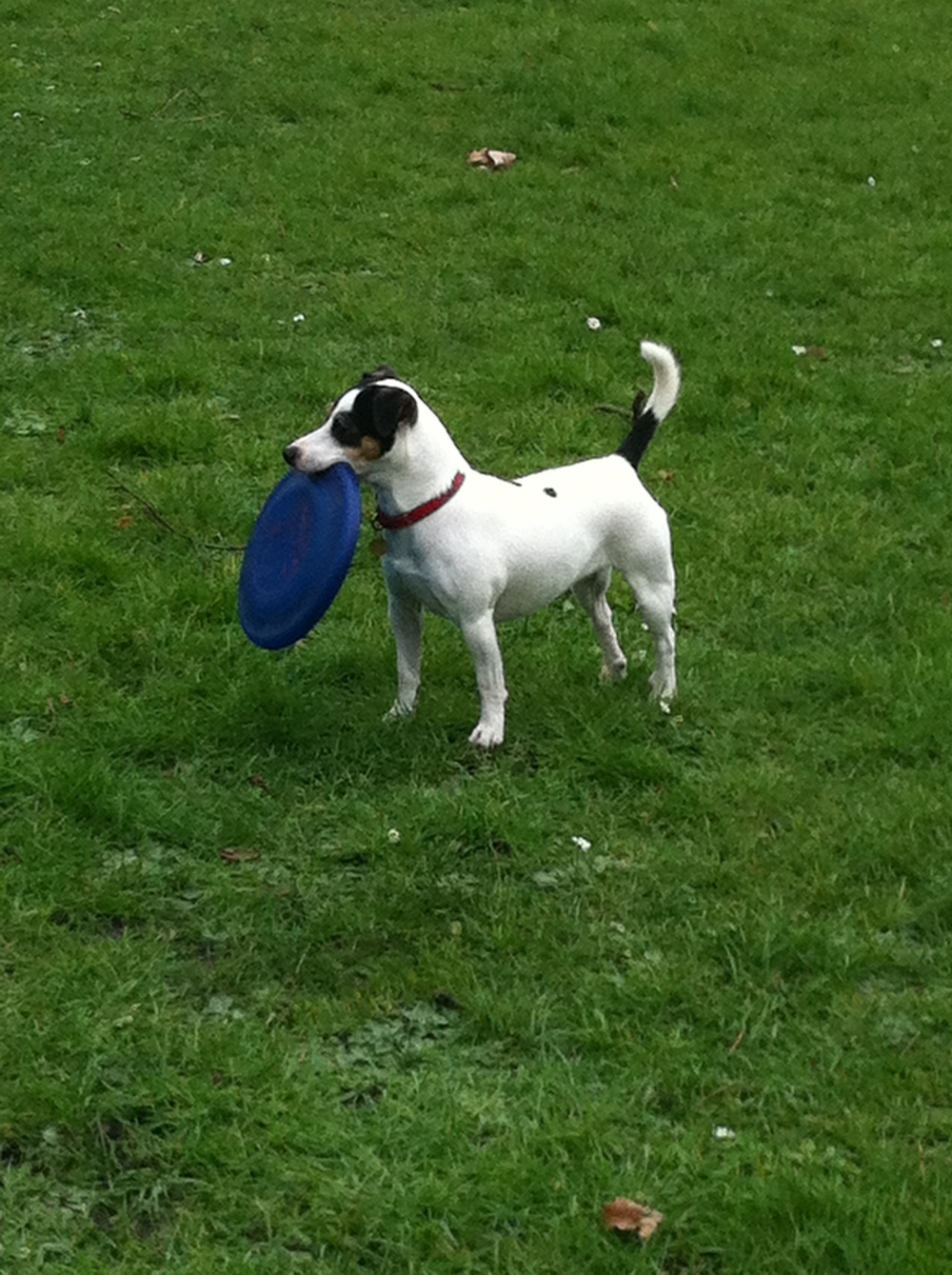 "When I catch the frisbee it's very important that everyone watching shouts, ""Booyah!"" I just caught the frisbee so...."