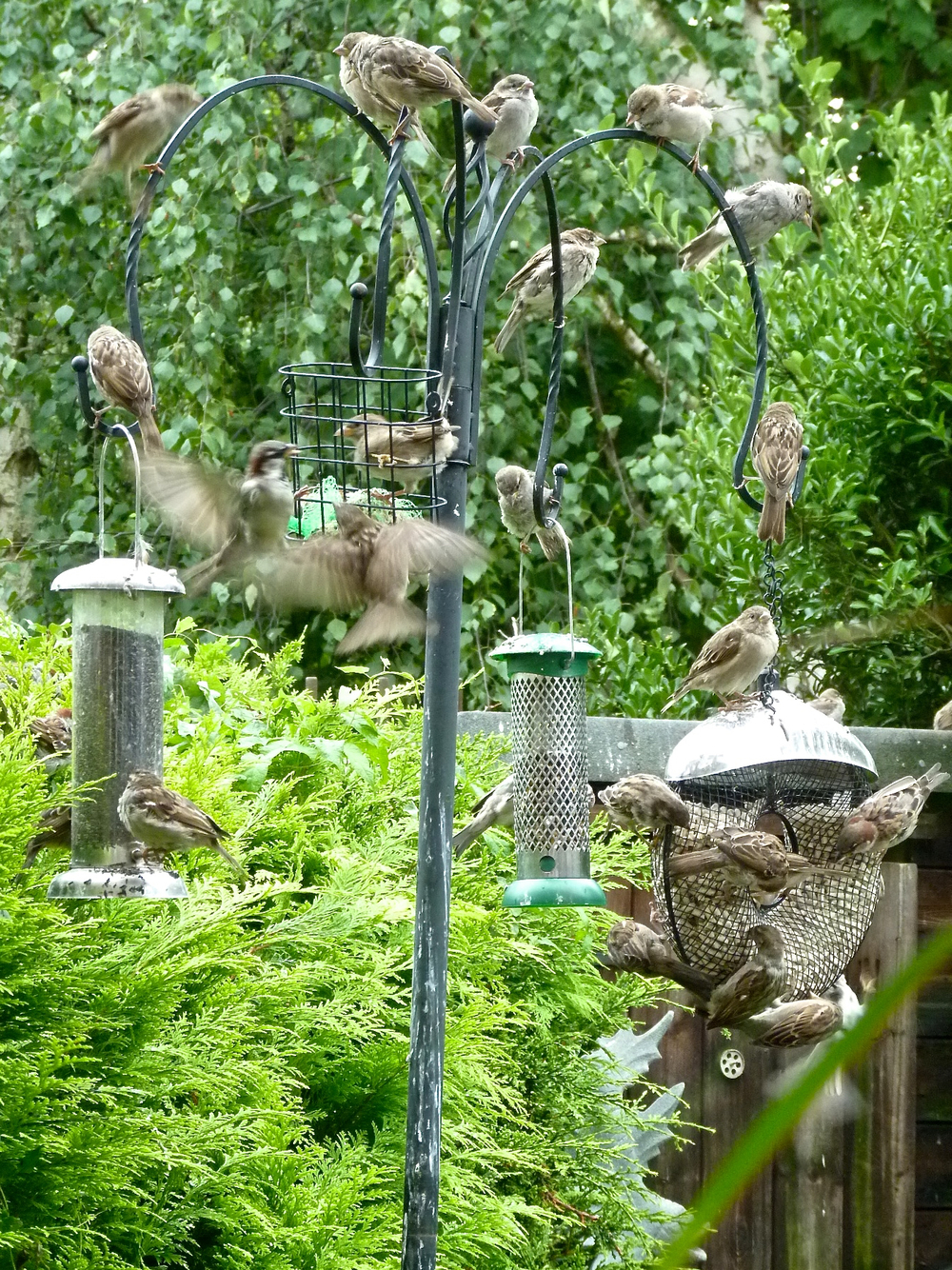 "This is our bird feeder. I protect the birds who eat here from Foxykins and from kitty cats. If someone shouts ""Kitty!"", I run into the garden barking and chase the cats away! Kitty is a word I know. The birds in this picture are called sparrows. How many sparrows can you count?"