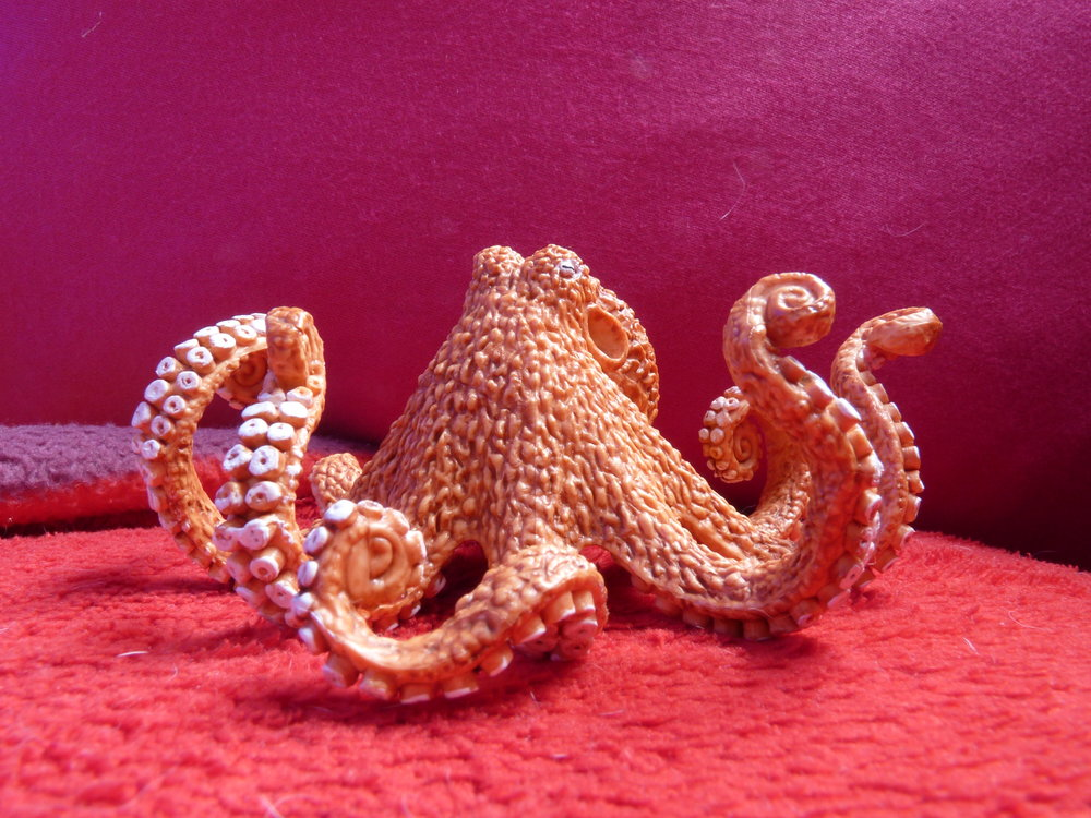 While all the other animals learned to surf or had girlfriends - he stared into tidepools and aquariums. He even worked in a shop and kept a few octopuses himself. Not octopi, mind. Can't mix Greek and Latin.