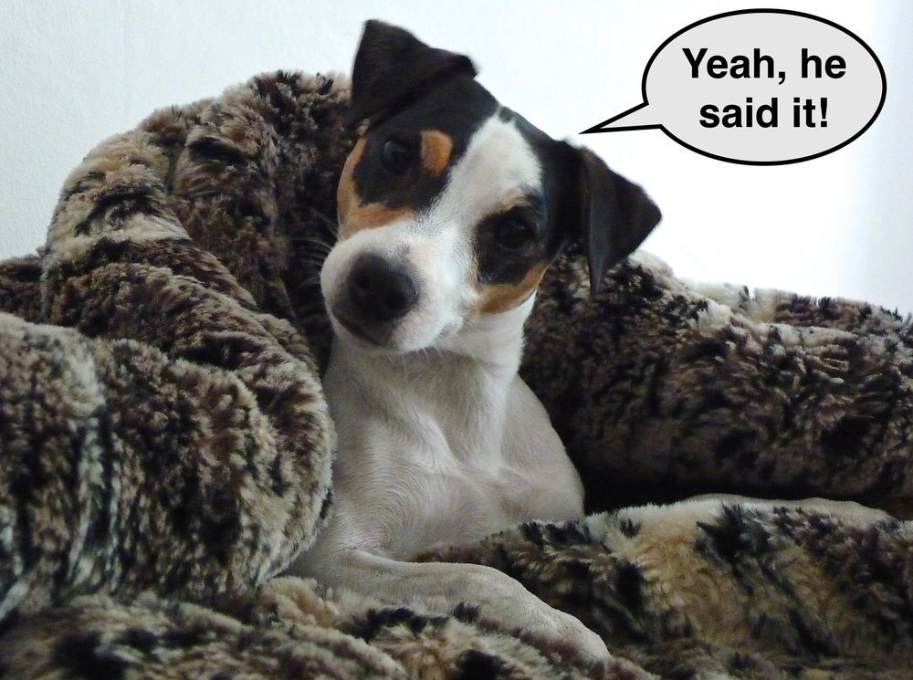 OLIVE DOG! copy 2.jpeg