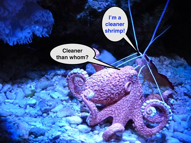 Cephalopod humor. (Is there a word for when two creatures will, if given the chance, eat one another? As adults? Crabs and octopus come to mind…) #technopagan #octopus #octopusmessiah #octonation #marinescience #psilocybe #cephalopods #marinescience #marinememes #octopusmemes #octopusart #summerreading #reeftank #dmttrip #psychedelicsociety #psychedelic #psychedelicart #deepthoughts #marinehumor #findmytribe #octopusesgarden #beachreads #octopusesofinstagram