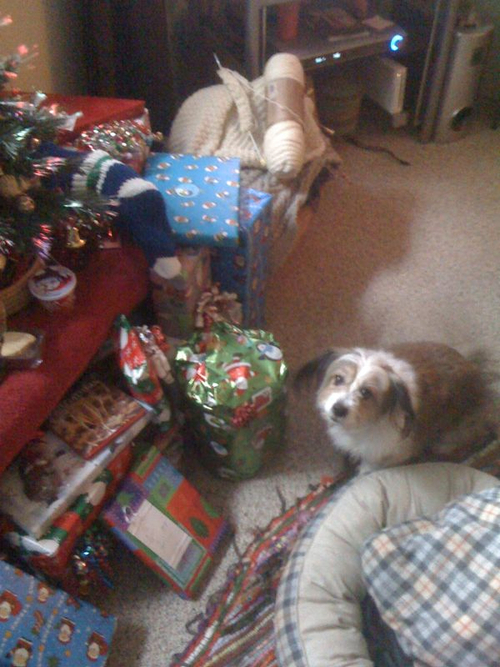 Roxy wants to open presents early!  She has more treats than I do under that tree.