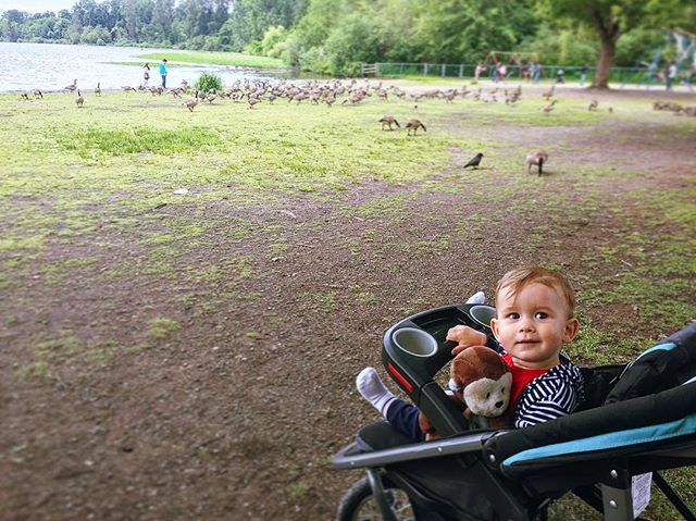 Rupert kicking it in the park with his feathered friends. Oh and Mr. Monkey of course!