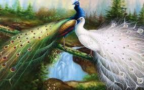 images.jpg peacock