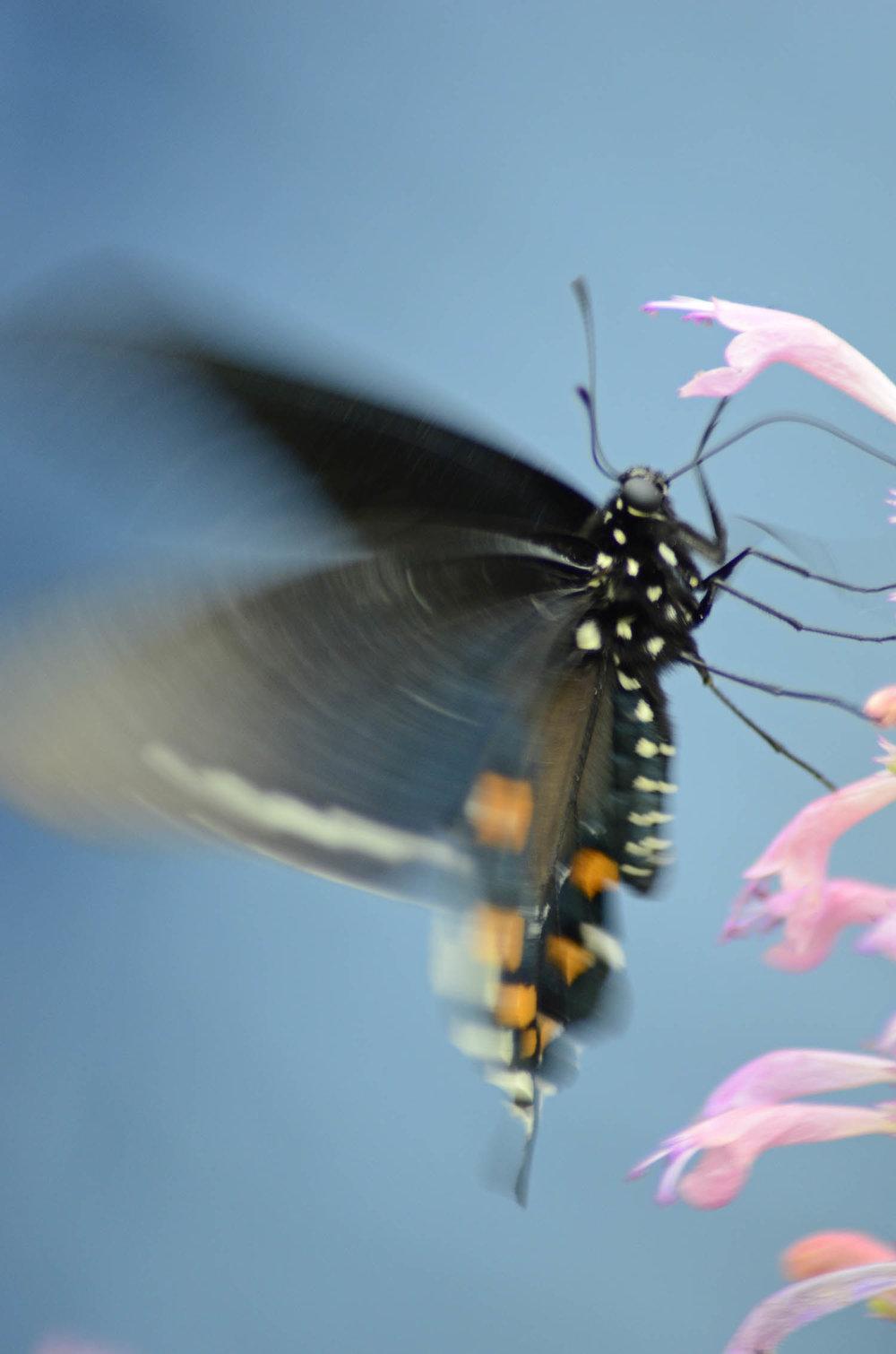 butterflymotion.jpg