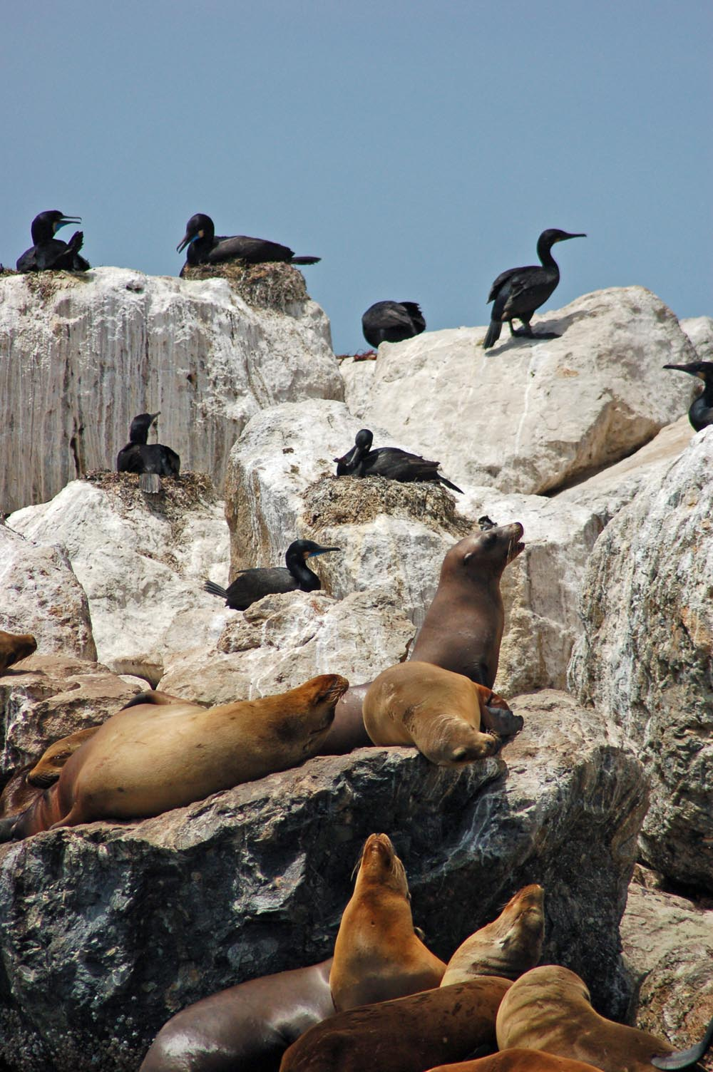seals&cormorants.jpg