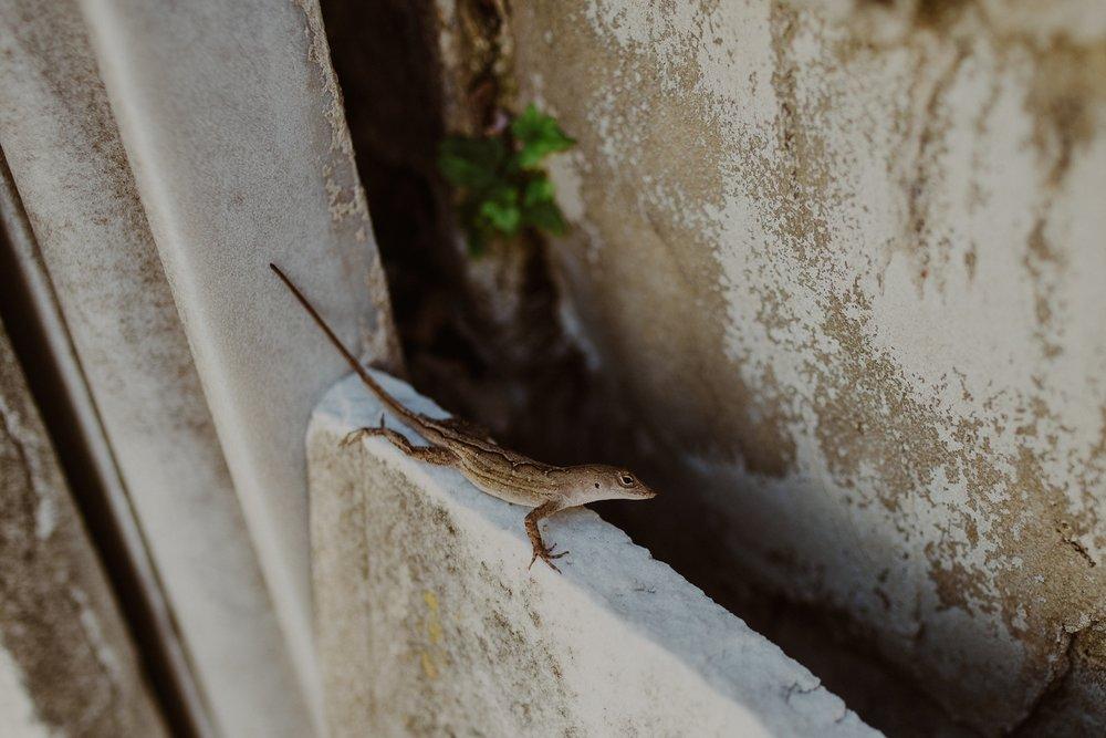 Cemetery Lizard