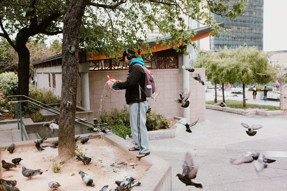 Man Feeding Birds in San Francisco