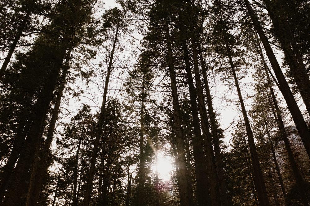Yosemite Park Trees