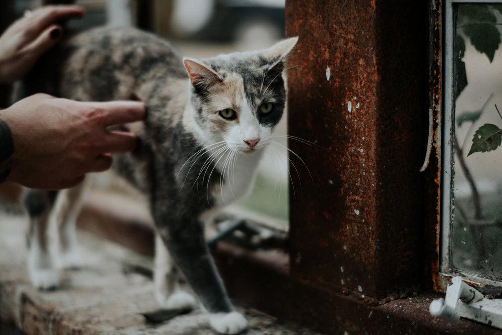 cat photobombed engagement