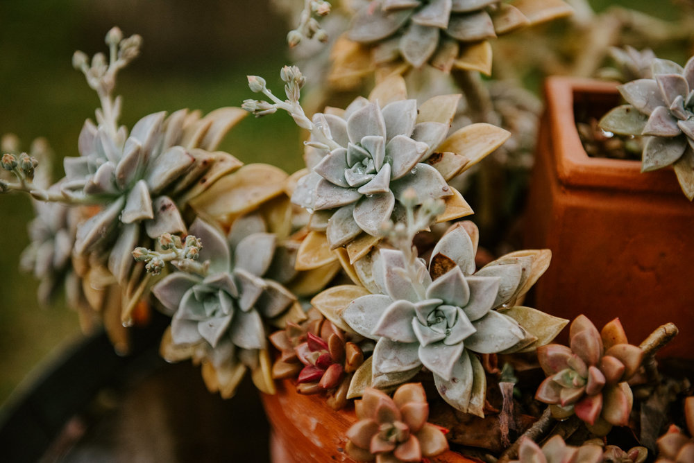 succulent decor at texas wedding