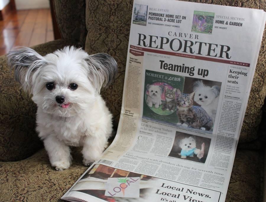 Norbert Carver Reporter