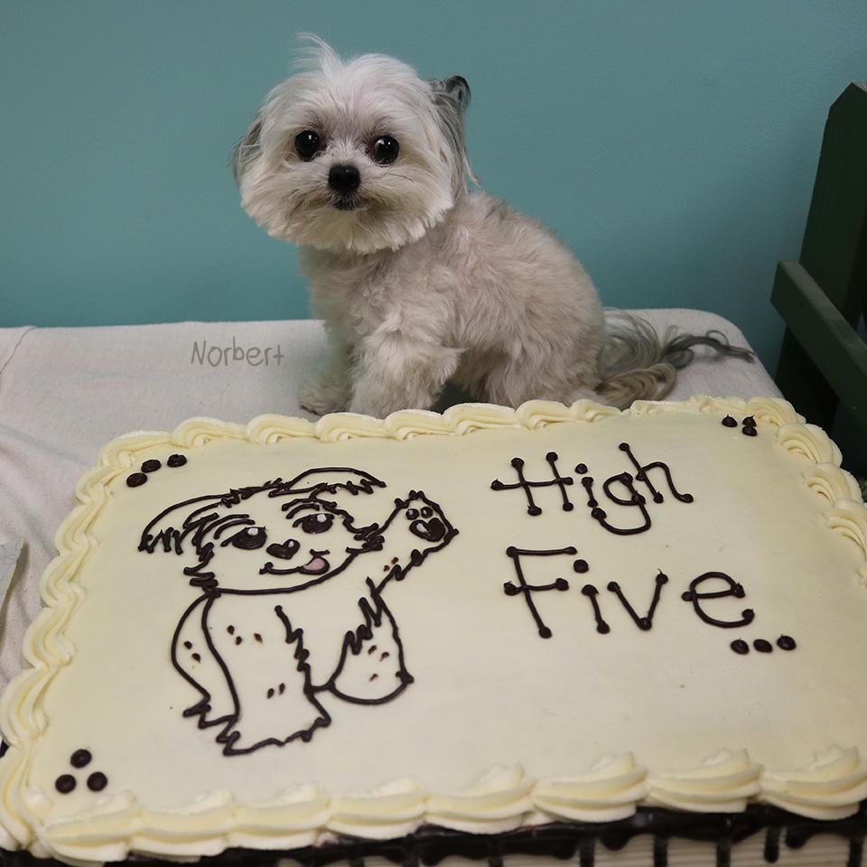 Norbert & Cake.jpg