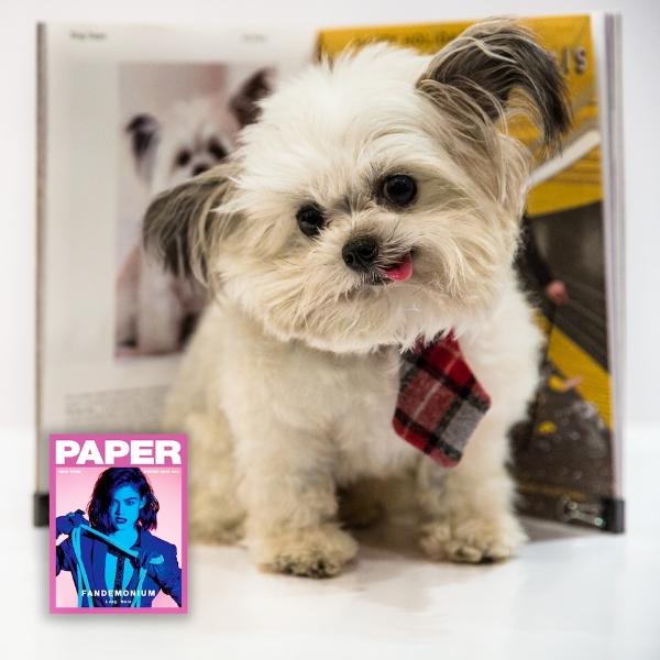Norbert Paper Magazine.jpg