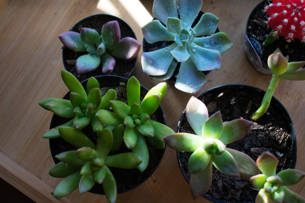 succulents3 (1 of 1).jpg