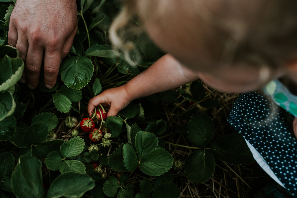 Strawberry Picking-3.jpg