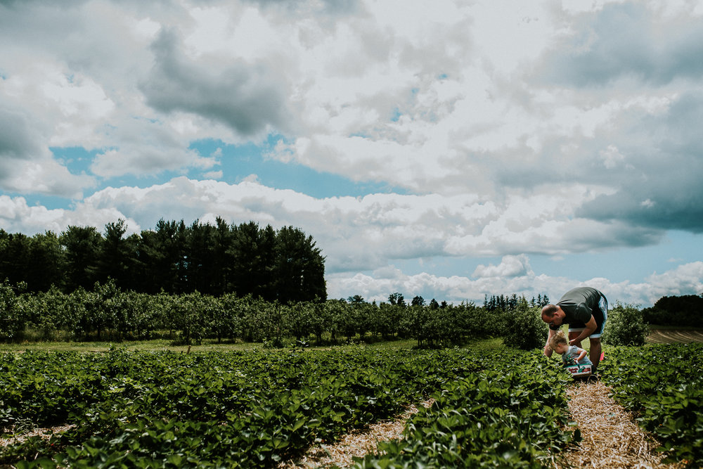 Strawberry Picking-4.jpg