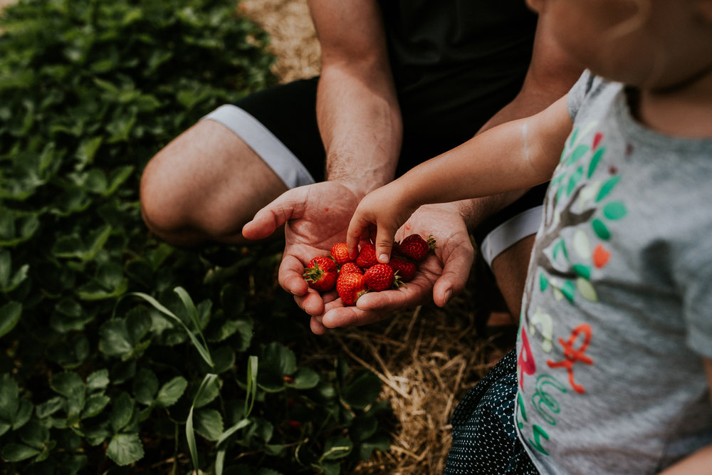 Strawberry Picking-5.jpg