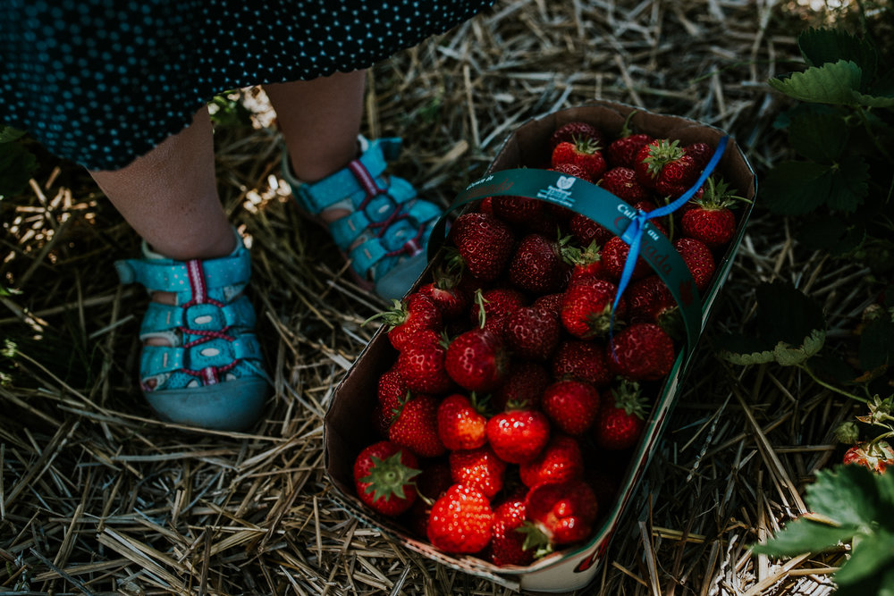 Strawberry Picking-10.jpg