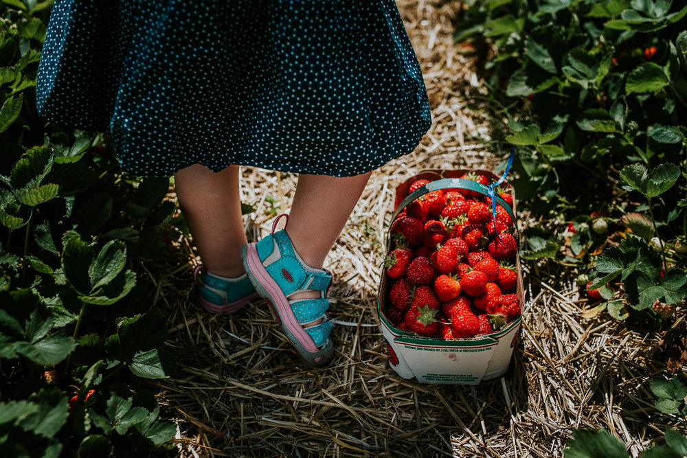 Strawberry Picking-11.jpg