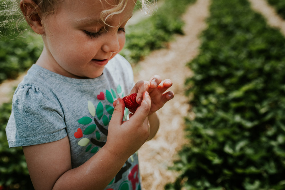 Strawberry Picking-14.jpg