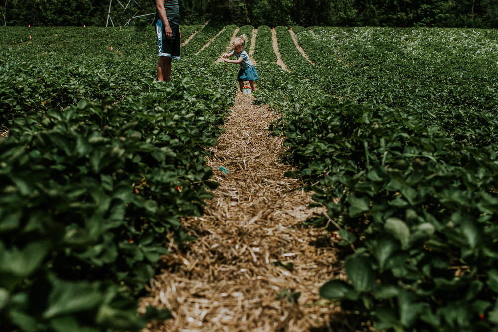 Strawberry Picking-16.jpg
